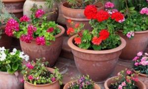 Цветы в горшках на даче фото