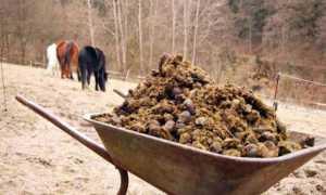 Конский навоз как удобрение как применять весной