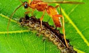 Преимущества биологического метода борьбы с вредителями