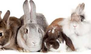 Кто быстрее заяц или кролик