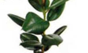Условные обозначения ухода за комнатными растениями