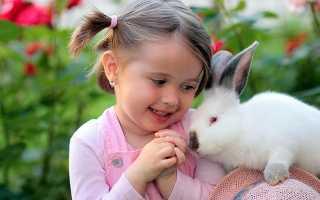 Аллергия на кролика как проявляется