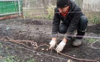 Укрытие винограда на зиму в украине видео