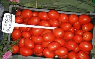 Грунтовые помидоры сорта низкорослые