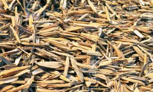 Рисовая шелуха как удобрение