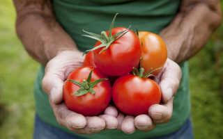 Какие сорта помидоров лучше сажать в теплице