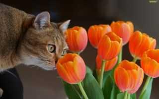 Как посадить луковицы тюльпанов осенью в горшок