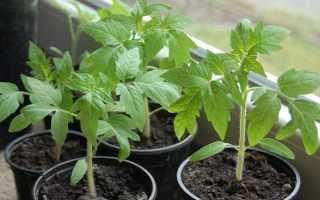 Посев томатов без пикировки