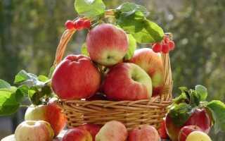 Как сделать пюре из яблок на зиму
