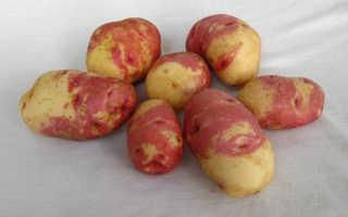 Картофель иван да марья описание сорта фото