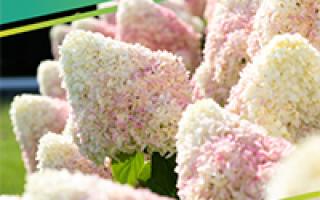 Можно ли тушить маринованную капусту