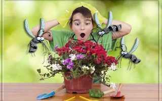 Чем удалить мошек в комнатных цветах