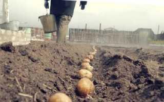 Как сажать картофель под зиму