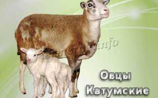 Катумские овцы отзывы форум