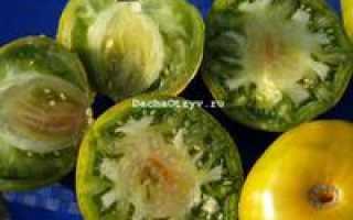 Томат малахитовая шкатулка отзывы фото урожайность