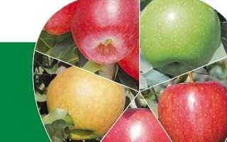 Определить сорт яблок по внешнему виду