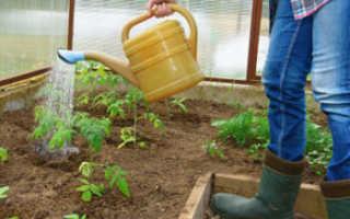 Полив помидоры в теплице из поликарбоната