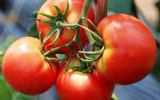 Японские сорта томатов каталог