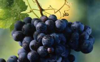 Неукрывные сорта винограда фото