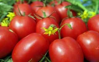 Томат семь сорок отзывы фото урожайность