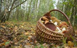 Как проверить грибы с помощью луковицы
