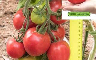 Сорта томатов фирмы партнер внесенные госреестр