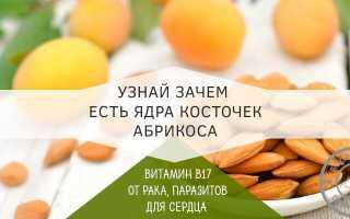 Польза орехов из абрикосовых косточек