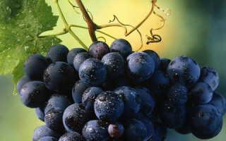 Черный виноград калорийность на 100 грамм