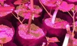 Земля для посадки чубуков винограда