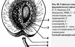 К чему относится арбуз и дыня
