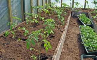 Май 2020 томат посадка пересадка