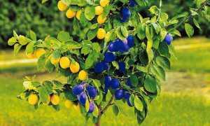 Что такое окулировка растений