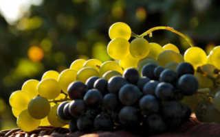 Сколько сахара в килограмме винограда