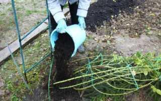 Как закрыть розы на зиму в поволжье