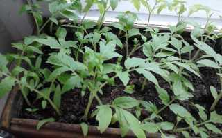 Какие удобрения относятся к азотным удобрениям