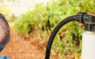 Биопрепараты для винограда от вредителей и болезней