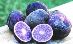 Фиолетовая картошка сорт польза