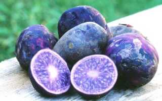 Фиолетовый картофель польза и вред