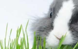 Чем кормить кроликов летом