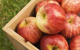 Зимнее красное яблоко сорт