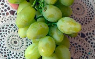 Виноград ладушка описание сорта фото отзывы