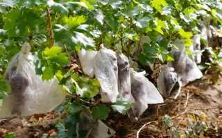 Нужно ли белить виноград