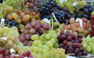Лучшие прибалтийские сорта винограда