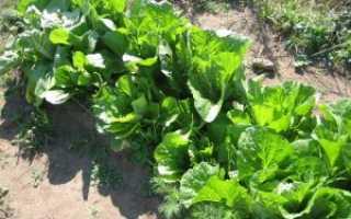 Пекинская капуста это салат или капуста