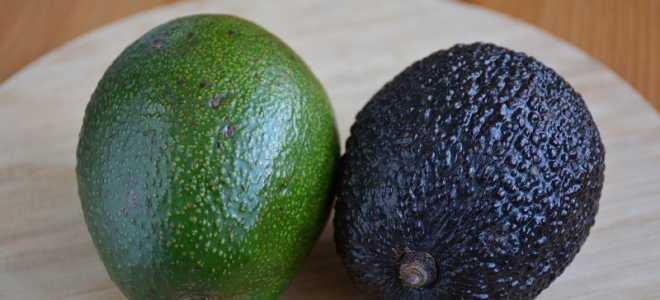 Как должно выглядеть авокадо